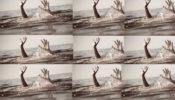 আখাউড়া সাতপাড়ায় বালতির পানিতে ডুবে শিশুর মর্মান্তিক মৃত্যু