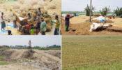 আখাউড়ায় নদী খনন ও বাঁধ নির্মাণে ৫০০ একর অনাবাদি জমিতে ধানের অাবাদ