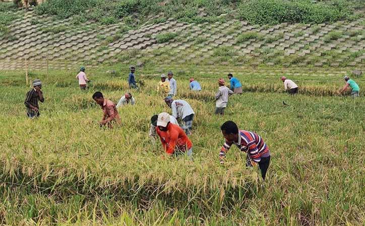ব্রাহ্মণবাড়িয়ায় করোনা 'জয়' করে হাসছে কৃষক
